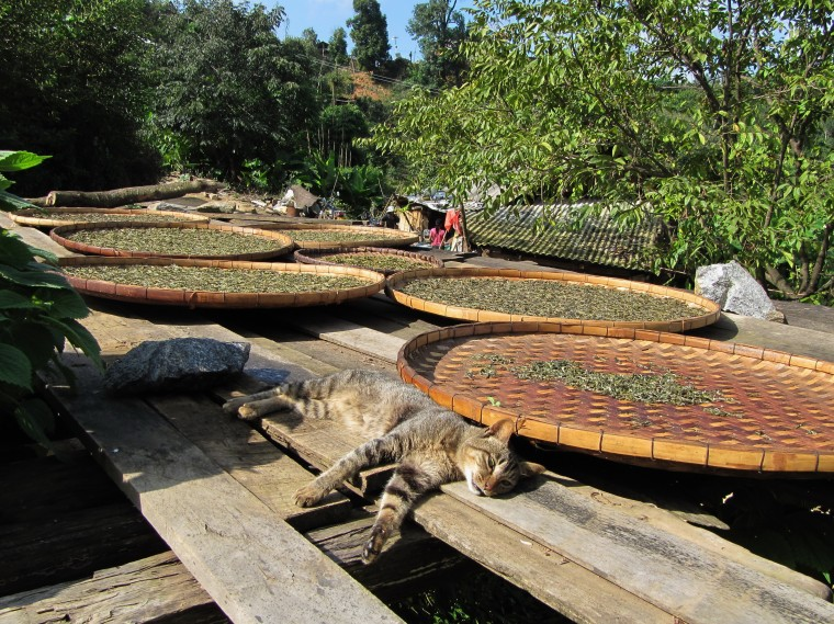 cat an tea drying in October, Naka